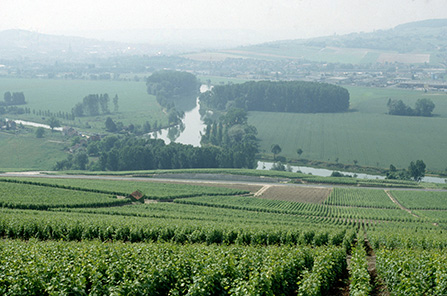 champagne-vineyards